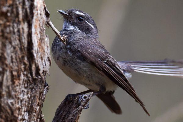 CAROLE-BIRD-PHOTOS71