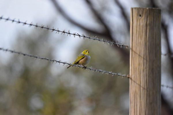 CAROLE-BIRD-PHOTOS72