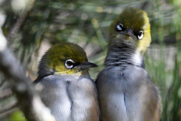 CAROLE-BIRD-PHOTOS73