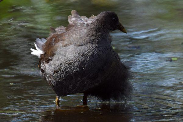 CAROLE-BIRD-PHOTOS76