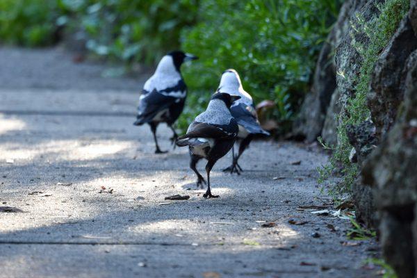 CAROLE-BIRD-PHOTOS77