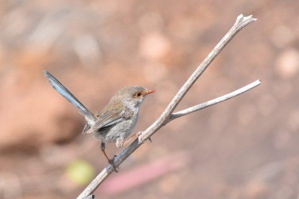 CAROLE-BIRD-PHOTOS78