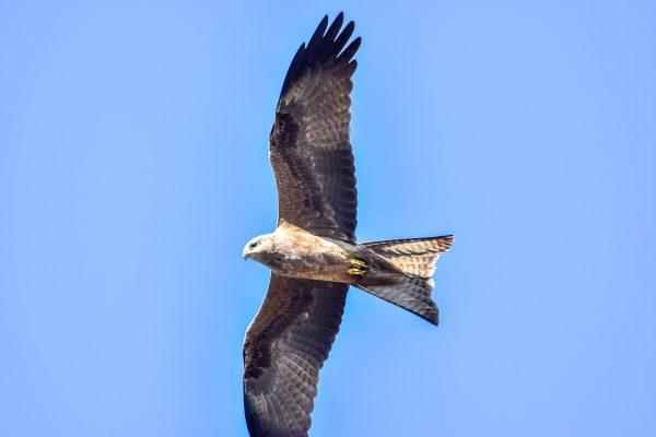CAROLE-BIRD-PHOTOS79