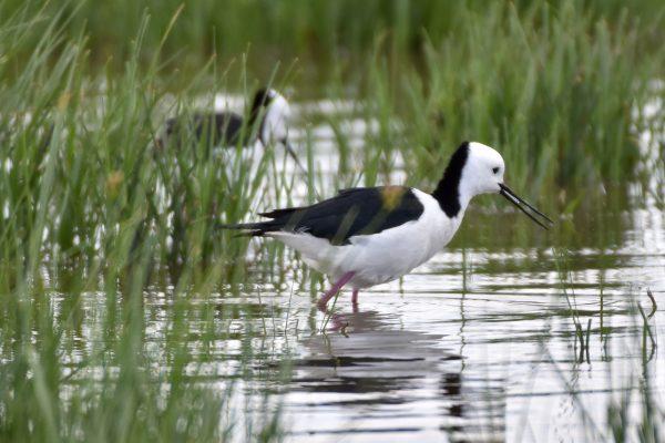 CAROLE-BIRD-PHOTOS8