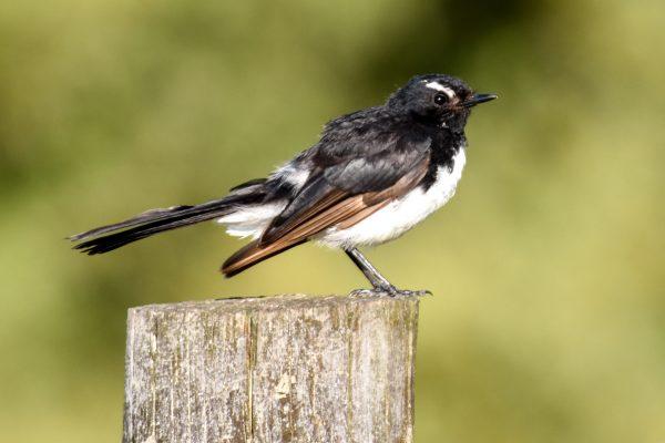 CAROLE-BIRD-PHOTOS81