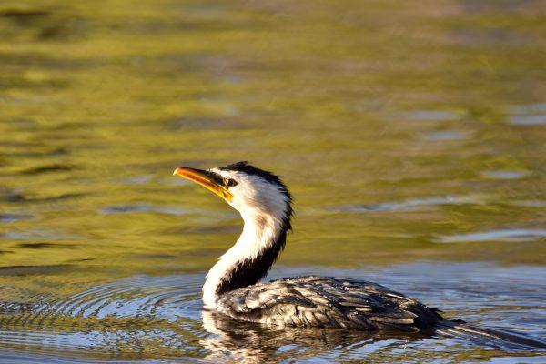CAROLE-BIRD-PHOTOS82