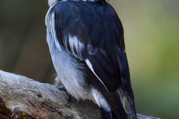 CAROLE-BIRD-PHOTOS83
