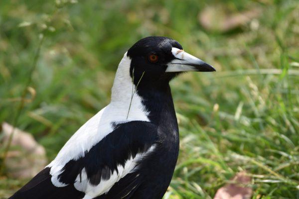 CAROLE-BIRD-PHOTOS85