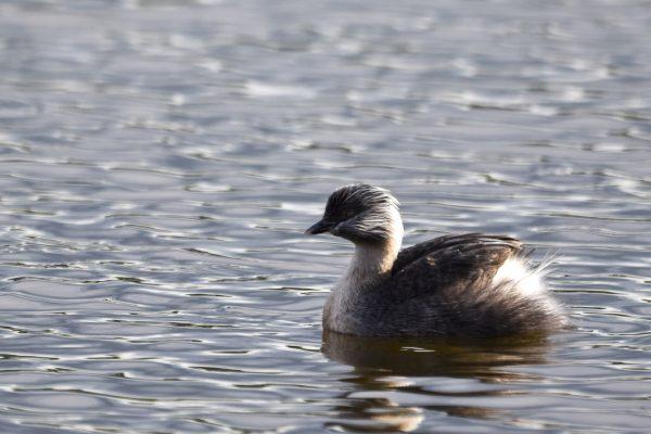 CAROLE-BIRD-PHOTOS86