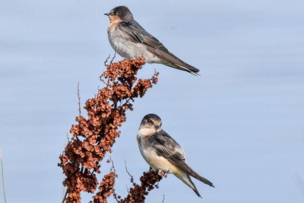 CAROLE-BIRD-PHOTOS88
