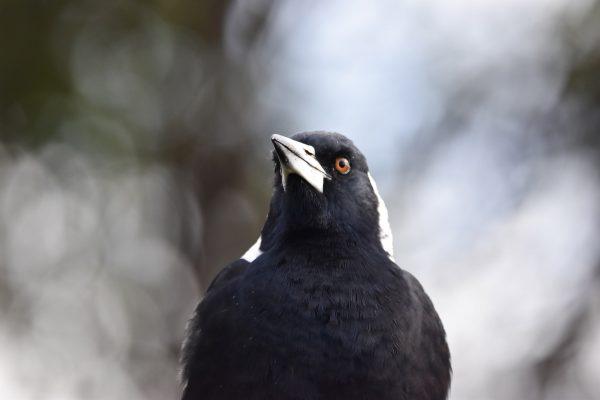 CAROLE-BIRD-PHOTOS89