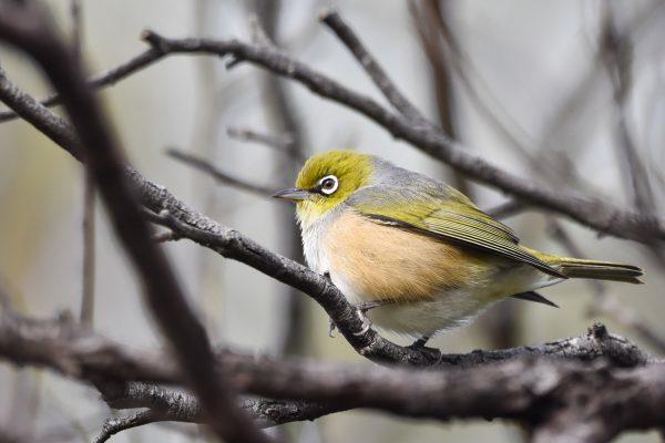 CAROLE-BIRD-PHOTOS9
