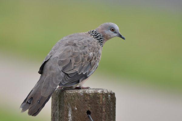 CAROLE-BIRD-PHOTOS90