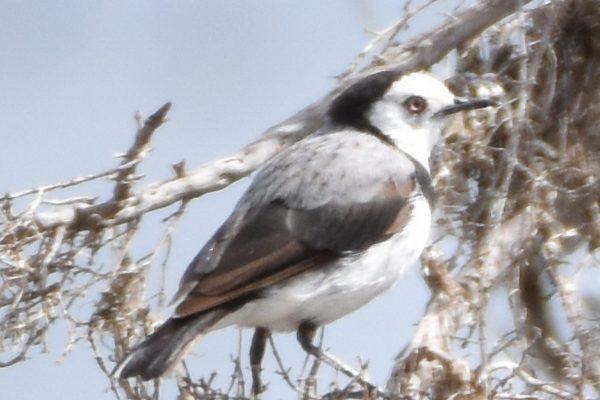 CAROLE-BIRD-PHOTOS91