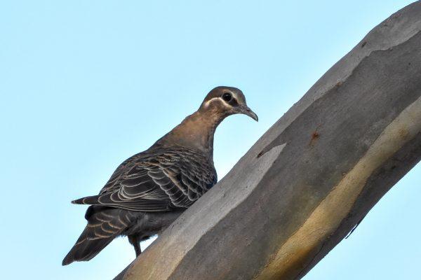 CAROLE-BIRD-PHOTOS92