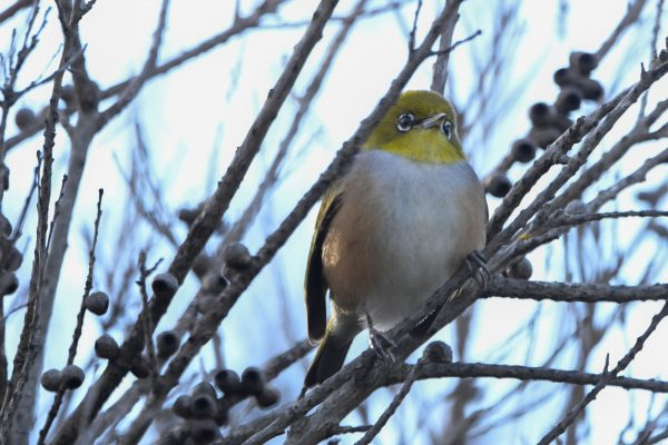 CAROLE-BIRD-PHOTOS94