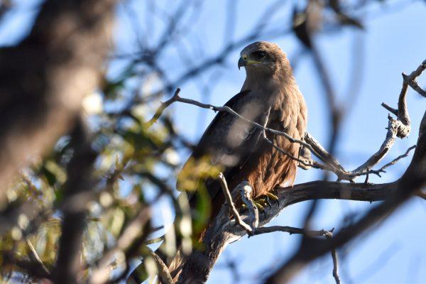 CAROLE-BIRD-PHOTOS95