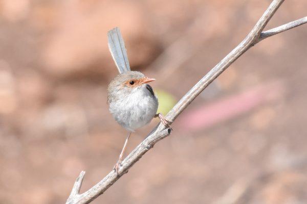 CAROLE-BIRD-PHOTOS96