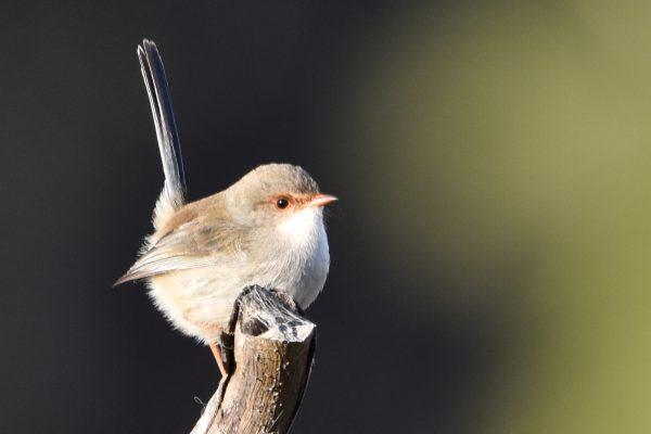CAROLE-BIRD-PHOTOS97