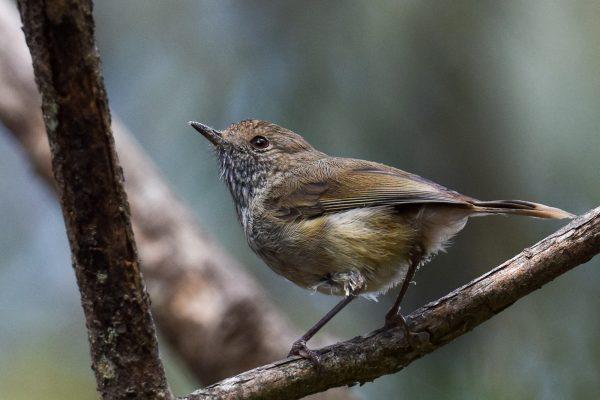 CAROLE-BIRD-PHOTOS98