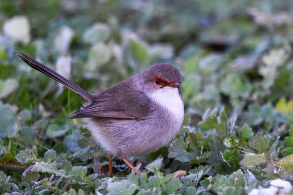 CAROLE-BIRD-PHOTOS99